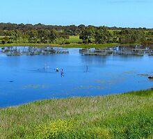 River Road Wetlands, Noarlunga, Adelaide by Ali Brown