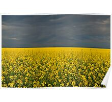 Storm Over Canola Poster