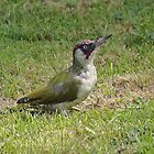 Green Woodpecker by wizard327