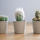 Three Cacti by petegrev