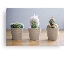 Three Cacti Canvas Print