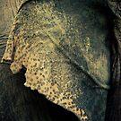 Elephant Ear by lokanin