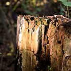 A Stump by Marinamade