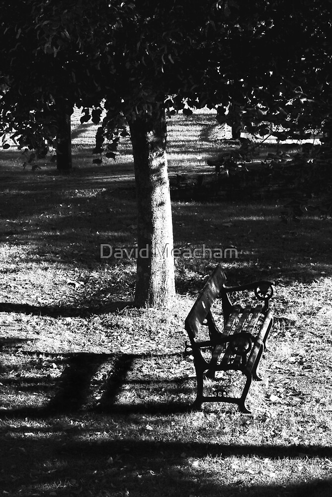 Morning by David Meacham