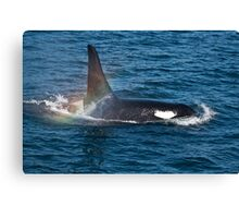 Killer Whale Orca Canvas Print