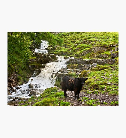 By the Waterfall Photographic Print