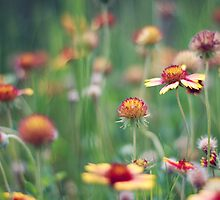 Indian blankets by Colleen Rudolph