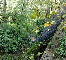 Tree over the Beck by Merice  Ewart-Marshall - LFA