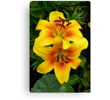 Golden Lilies .. In The Rain Canvas Print