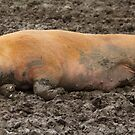 Muddy but Blissful by Alf Myers