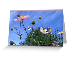Anemone Japonica  Greeting Card