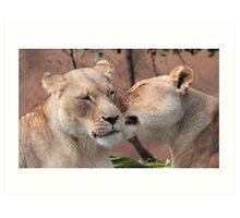 Lion Kiss Art Print