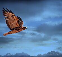 HAWK IN FLIGHT by Charlene Aycock IPA