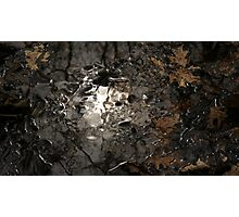 """Swamped In Silver"" Photographic Print"