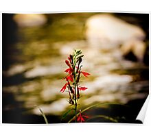 Red flower standing tall in a creek Poster