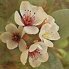 Textured Flowers by Brenda Boisvert