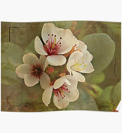 Textured Flowers Poster