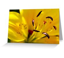 Summer Lily Greeting Card