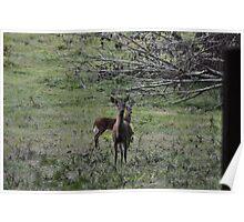 Deer Sighting Poster