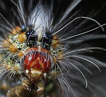 Festive Caterpillar by Etwin