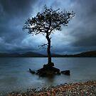 Scotland: Standing Alone by Angie Latham
