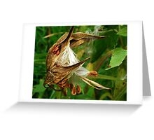 Once upon a Milkweed... Milkweed whimsy Greeting Card