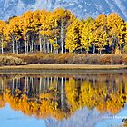 REFLECTIVE ASPENS IN FLAME by Charlene Aycock IPA
