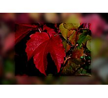 Wonderful Autumn Photographic Print