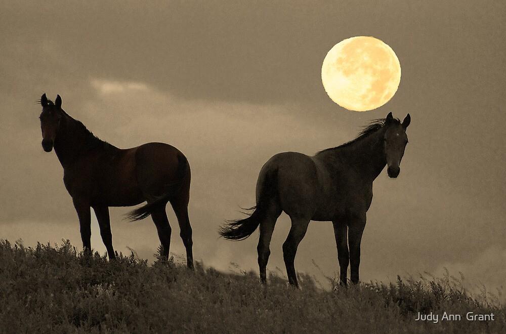 Moon Light Horses by Judy Grant