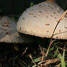Mushrooms by Dana Yoachum