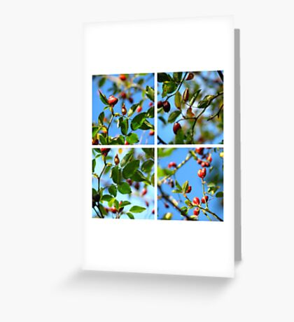 Rosehips - Polyptych Greeting Card
