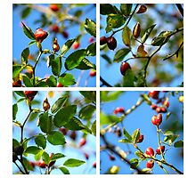 Rosehips - Polyptych Photographic Print