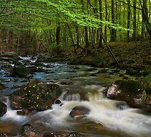 Herbst im Harz by stg123
