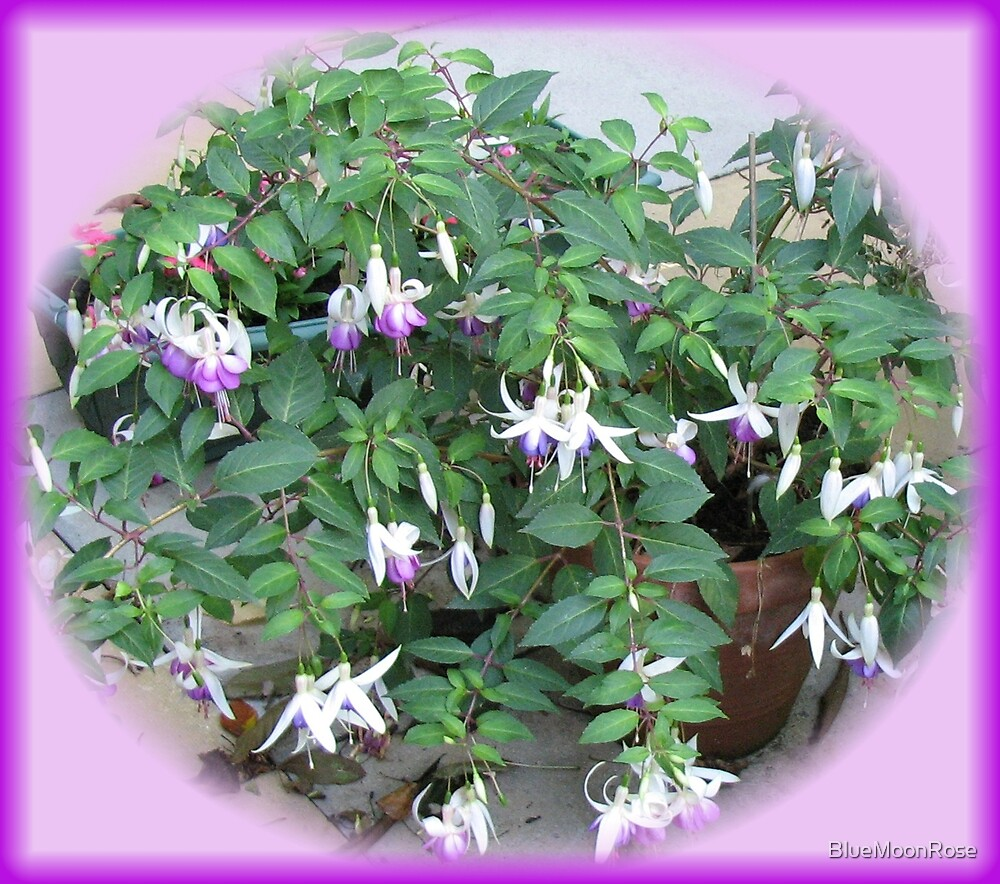 Dancing Fuchsia Belles - Oval Vignette by BlueMoonRose