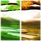 Seasons by Stephanie Cousins