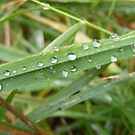 Grass and droplets. by Livvy Young