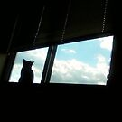 cat and clouds by catnip addict manor