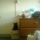 box of cat by catnip addict manor