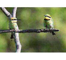 ''Rainbow Bee-eaters'' Photographic Print