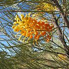 Large Native Grevillea Outback Australia. by Rita Blom