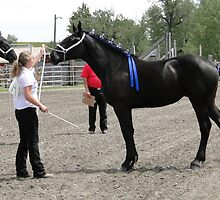 Percheron Mare Beauty II by Al Bourassa