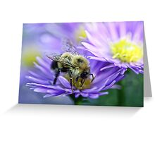 Bumble Bee - Fall Aster Greeting Card