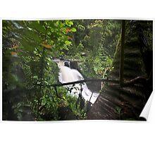 Rain Forest FNQ Poster