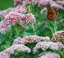 Monarch On The Move by Terry Aldhizer