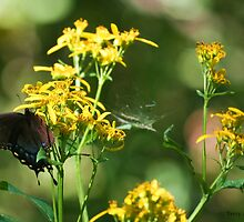 Tranquil Mountain Butterfly Cobweb Photograph by Terry Aldhizer