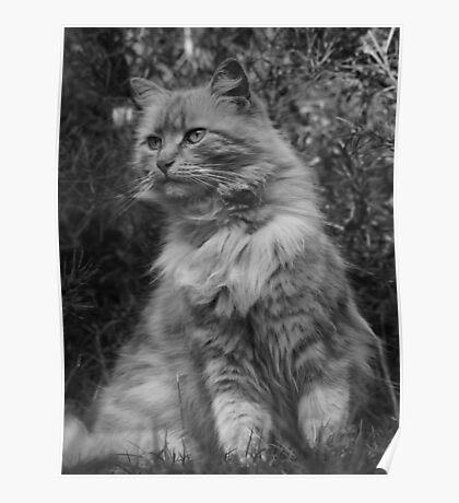 Posing Puss Poster