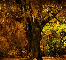 It's not the Angel Oak by Susanne Van Hulst