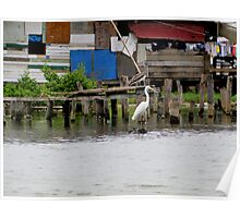 Pelican and Heron Coexistence Poster
