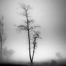 silent trees by Dinni H