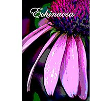 Echinacea Poster Photographic Print